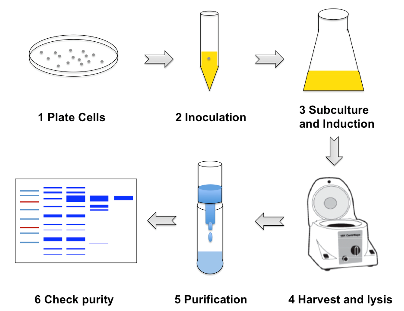 Overview of our Biochemistry module - protein expression and purification.