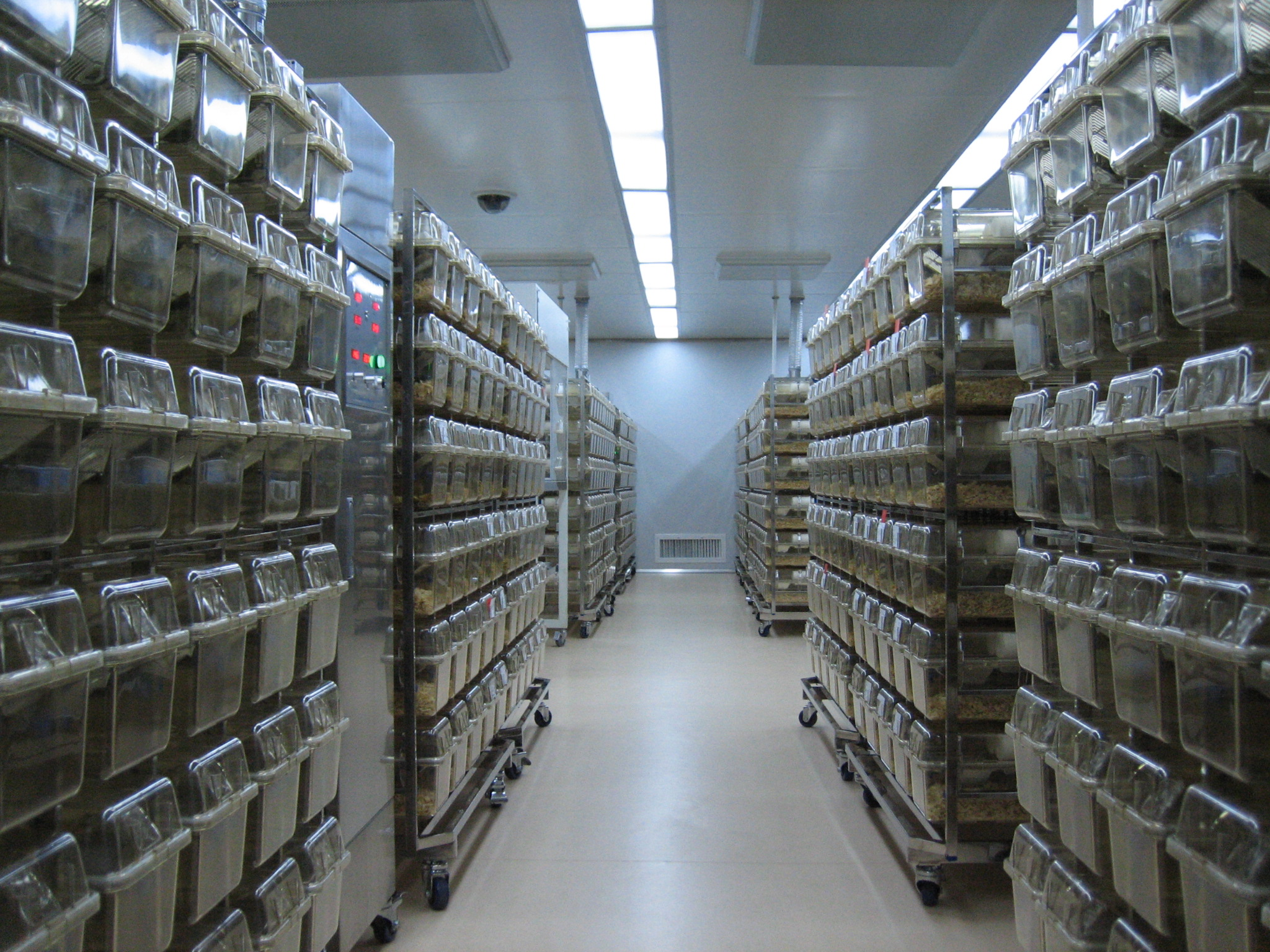 Mouse cages inside the specific pathogen free (SPF) facility.